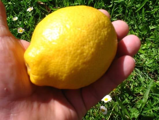 des solutions pour un citronnier qui ne fait pas de citrons [résolu]
