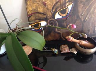 pourquoi mon orchid e tombe ses boutons. Black Bedroom Furniture Sets. Home Design Ideas