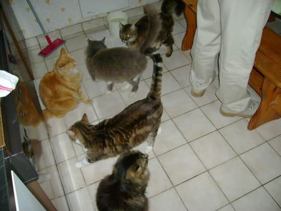 comment traiter un chaton de 4 mois qui a des puces résolu
