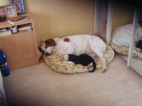 Rencontre entre chaton et chien