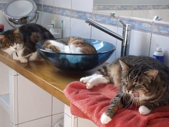 mes chats font leurs griffes sur mon salon en cuir neuf ! comment
