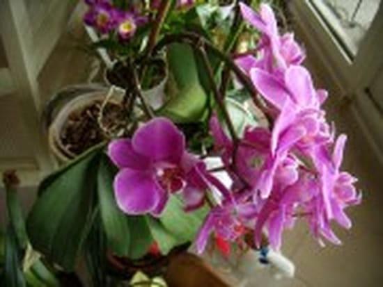 Comment et quand tailler une orchid e - Tailler orchidee apres floraison ...