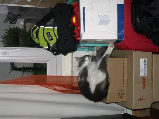 comment faut il habituer son chat son nouvel environnement quand on d m nage r solu. Black Bedroom Furniture Sets. Home Design Ideas