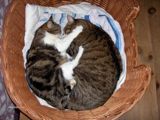 Comment empecher un chat de faire ses griffes chats - Comment empecher un chat d uriner partout ...