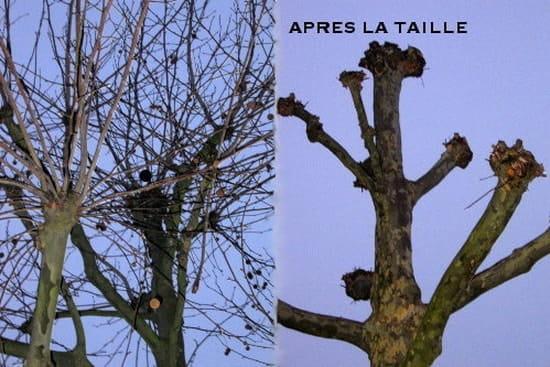 Comment et quand tailler une haie tr s envahissante r solu arbres et arbustes - Quand tailler les arbres et arbustes ...