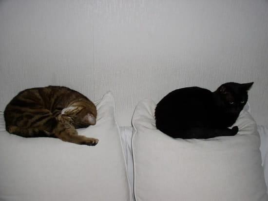 mon chat fait ses besoins partout dans la maison mais surtout sur le canap chats. Black Bedroom Furniture Sets. Home Design Ideas