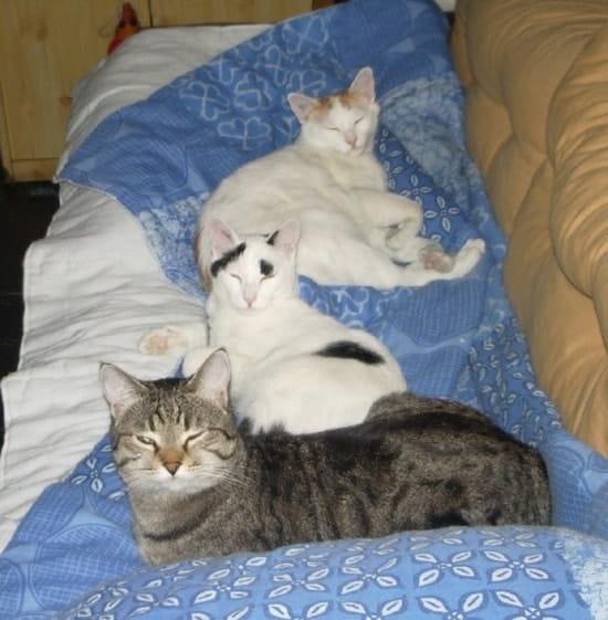 est ce que le citron peut servir de r pulsif pour les chats. Black Bedroom Furniture Sets. Home Design Ideas