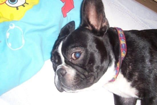 bonjour mon chien titeuf est allergie chiens. Black Bedroom Furniture Sets. Home Design Ideas