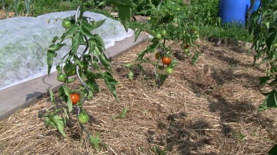 comment faire un bon compost r solu jardin bio. Black Bedroom Furniture Sets. Home Design Ideas