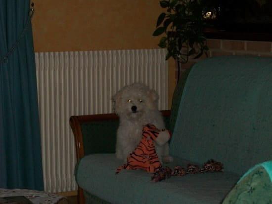 mon chien qui va avoir 6 ans refait ses besoins la maison que dois je faire. Black Bedroom Furniture Sets. Home Design Ideas