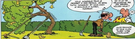 A quelle distance peut on planter une haie de landys en limite separative et que r solu - Distance plantation arbre maison ...