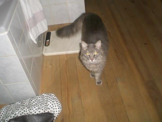 comment faire pour que mon chat ne fasse plus pipi sur le canap 233 chats