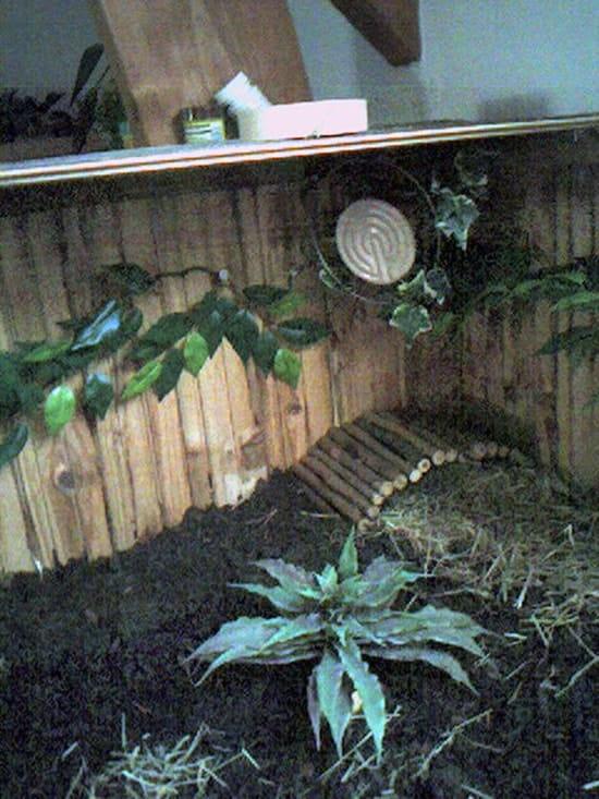 Que mettre au fond de ma caisse pour une tortue terrestre for Caca dans une piscine