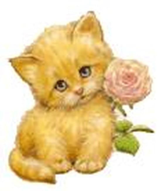 Comment retirer l 39 odeur d 39 urine d 39 un chat chats - Comment enlever odeur urine chat ...