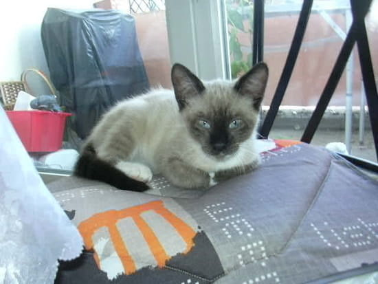 Comment emp cher mon chaton de mordiller r solu chats - Comment empecher un chat de gratter a la porte ...