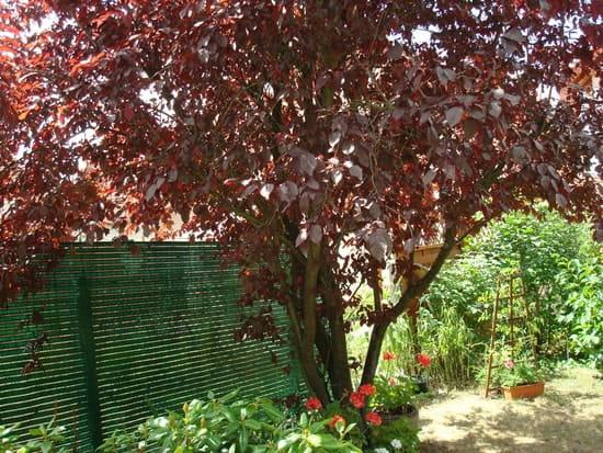 Quel arbre croissance rapide me conseillez vous r solu - Arbre mediterraneen croissance rapide ...