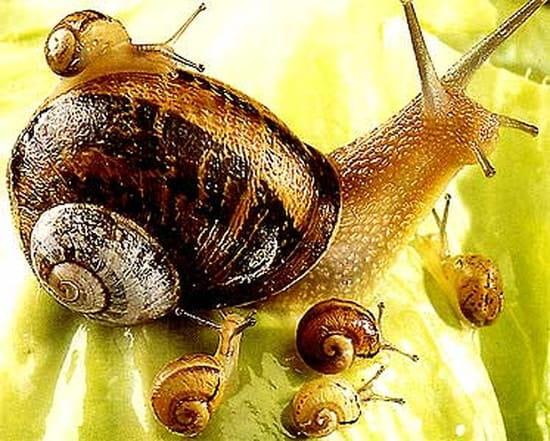 Comment me d barrasser des escargots comment se - Se debarrasser des escargots dans le jardin ...