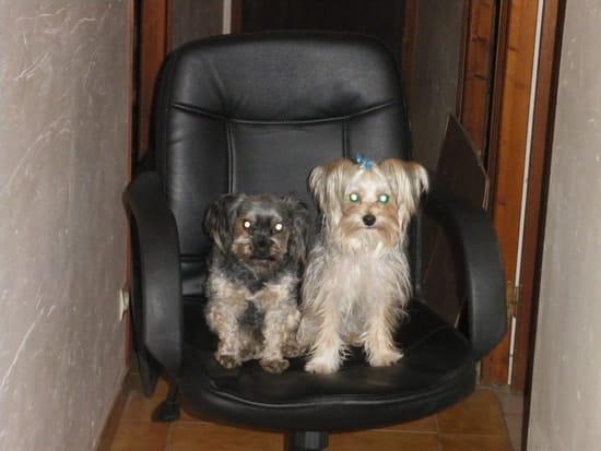 mon chien n 39 est toujours pas propre que faire r solu page 2. Black Bedroom Furniture Sets. Home Design Ideas