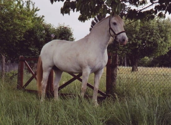 Bo terie chez le cheval vos t moignages r solu chevaux - Le fumier de cheval est il bon pour le jardin ...