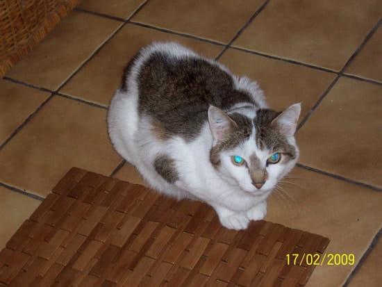 Mon chat ne supporte pas que je ferme la porte de chambre - Comment empecher un chat de gratter a la porte ...
