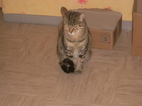 Comment faire pour ne plus que le chat attaque nos pieds - Comment empecher un chat de faire pipi partout ...
