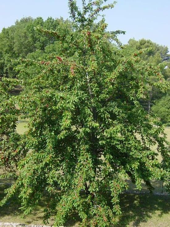 peut-on couper les branches du voisin ? [résolu]