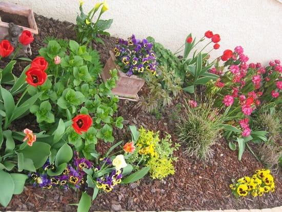 Comment loigner les chats de mes jardinieres r solu - Comment eloigner les chats de mon jardin ...