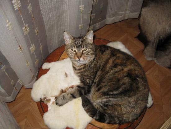 Mon chat a des ulc res buccaux avez vous connu cette - Comment empecher un chat de faire pipi partout ...
