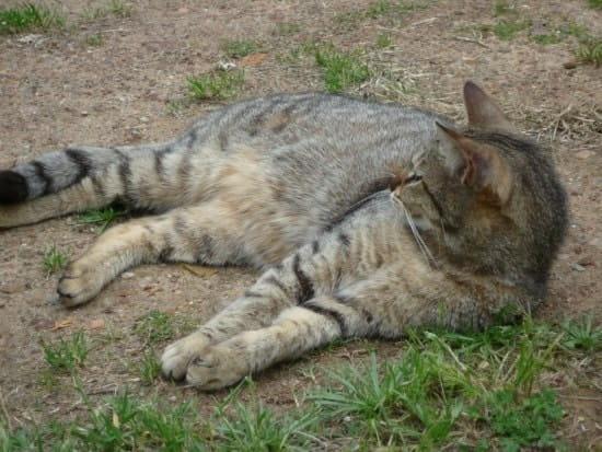 Comment faire cohabiter deux labradors et un chat ? - Chiens