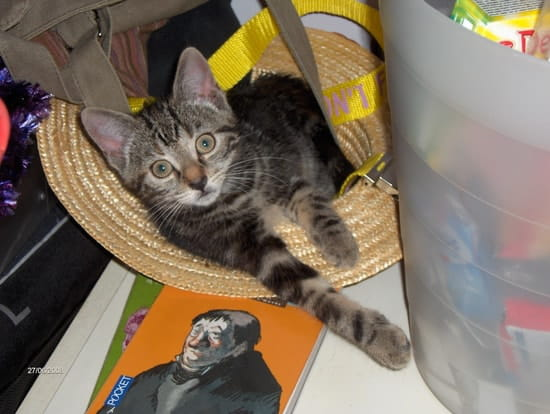 comment faire pour que mon chat ne fasse plus pipi sur mes sacs et par terre. Black Bedroom Furniture Sets. Home Design Ideas