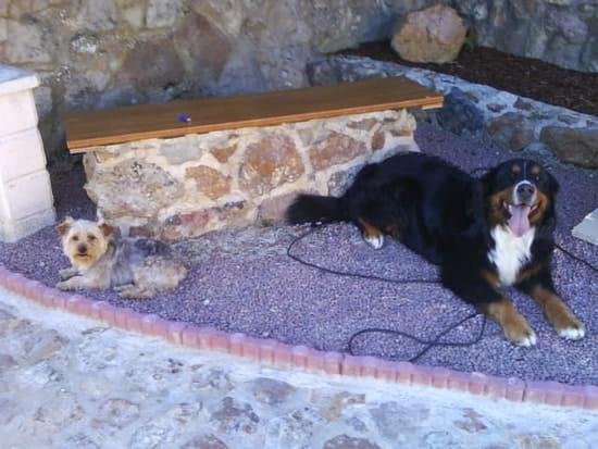 avez vous des astuces pour rendre un chien propre r solu. Black Bedroom Furniture Sets. Home Design Ideas