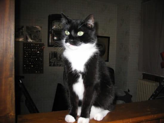 comment faire pour prot ger mon chat qui attrape des coups de soleil sur les ore r solu page 2. Black Bedroom Furniture Sets. Home Design Ideas