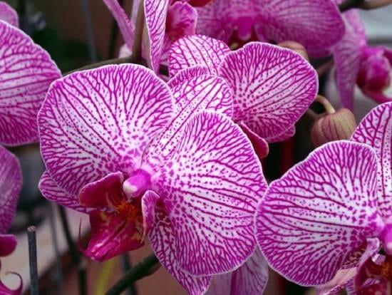 Pensez vous qu 39 on puisse planter plusieures orchid es - Comment garder une orchidee ...
