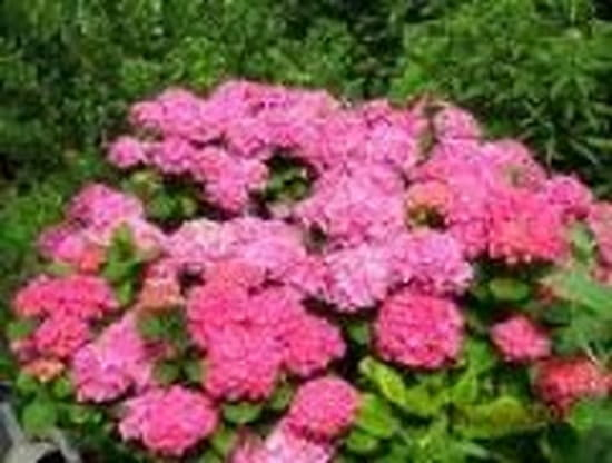 Je voudrais les noms de fleurs et arbustes qui poussent for Plantes qui poussent a l ombre