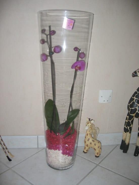 Comment arroser une orchid e for Deco quoi mettre dans un grand vase