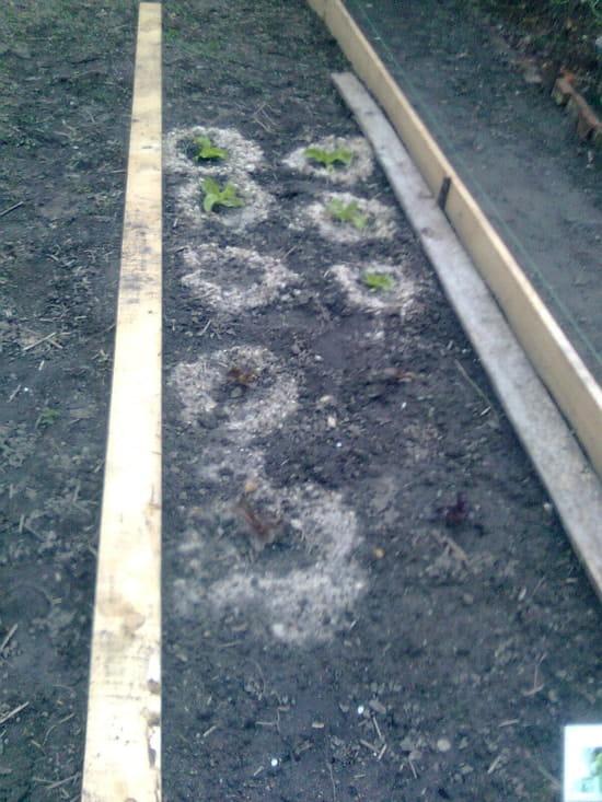 Comment se debarrasser des escargots et limaces dans les - Se debarrasser des escargots dans le jardin ...