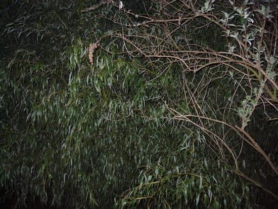 Comment se d barrasser de bambous r solu - Comment se debarrasser definitivement des bambous ...
