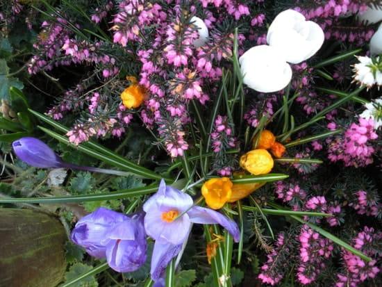 Semer des graines de roses tr mi res r solu - Semer roses tremieres septembre ...