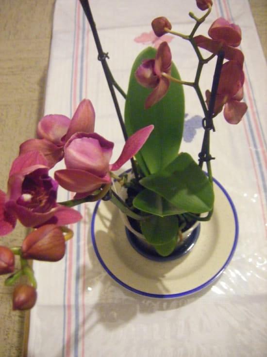 comment conserver le plus longtemps possible une orchid e. Black Bedroom Furniture Sets. Home Design Ideas