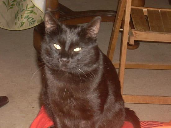 Comment expliquez vous le comportement agressif de mon - Comment eloigner les chats de mon jardin ...