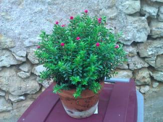 x9q4q52b-fleur-pierrot-s-.png