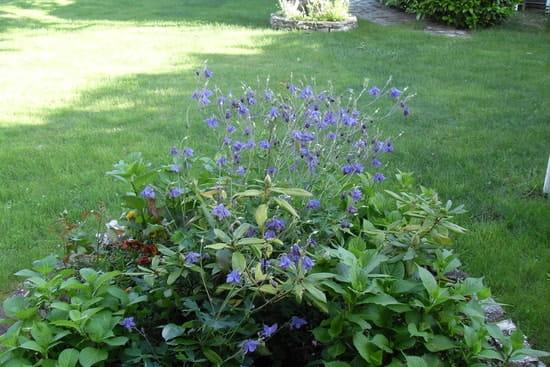 Pourquoi mon solanum arbuste ne fleurit il pas arbres et arbustes - Comment tailler un yucca ...