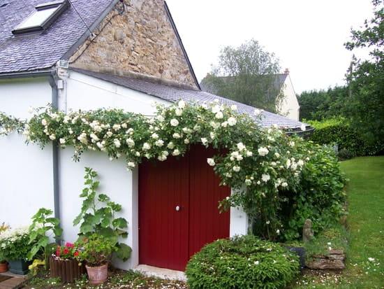 Comment planter un rosier grimpant contre un mur r solu - Comment fixer un rosier grimpant au mur ...