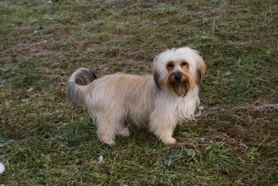 mon chien bichon maltais n 39 est toujours pas propre que faire r solu. Black Bedroom Furniture Sets. Home Design Ideas