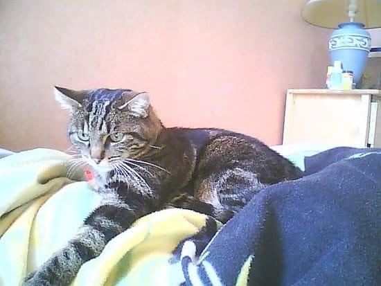 La liti re est propre mais mon chat fait ses besoins en - Comment empecher un chat de faire pipi partout ...