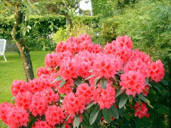 quelles fleurs planter dans mon jardin a l 39 ombre r solu fleurs. Black Bedroom Furniture Sets. Home Design Ideas