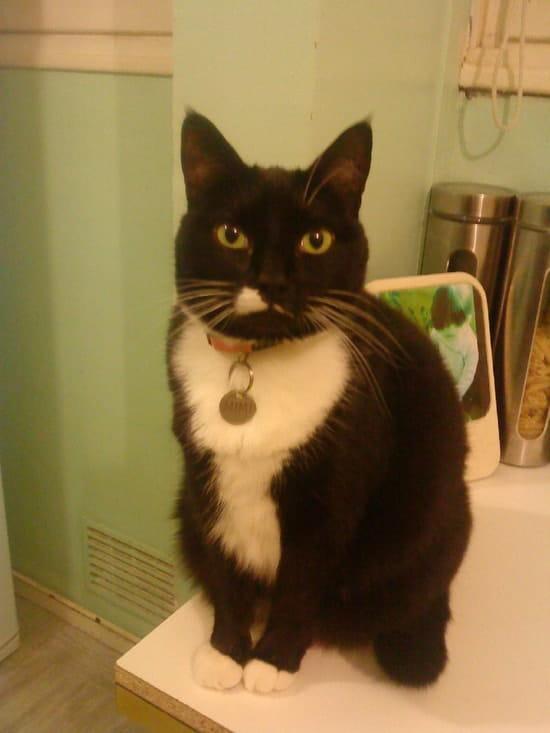 qu'est-ce qu'une chatte noire ressemble fre porno HD
