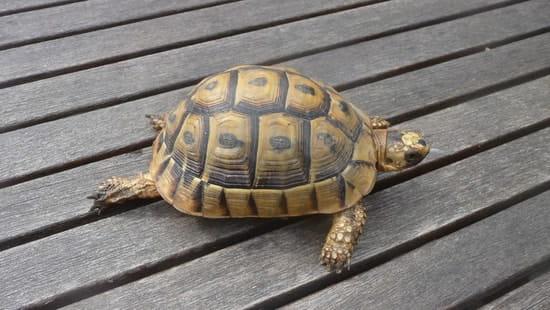 Trouv tortue dans mon jardin 77 que faire r solu - J ai trouve un herisson dans mon jardin que faire ...