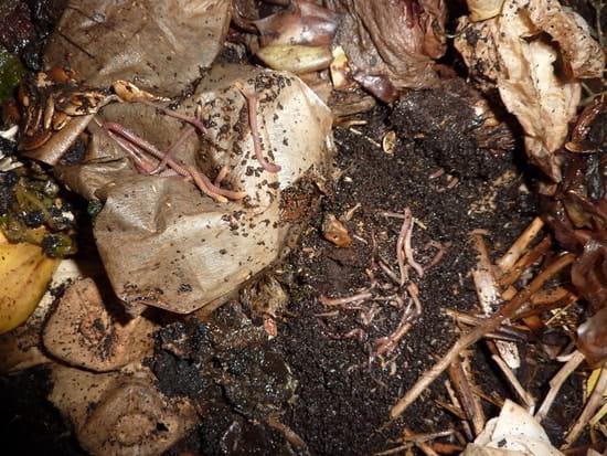 comment viter l 39 invasion de moucherons dans le compost. Black Bedroom Furniture Sets. Home Design Ideas