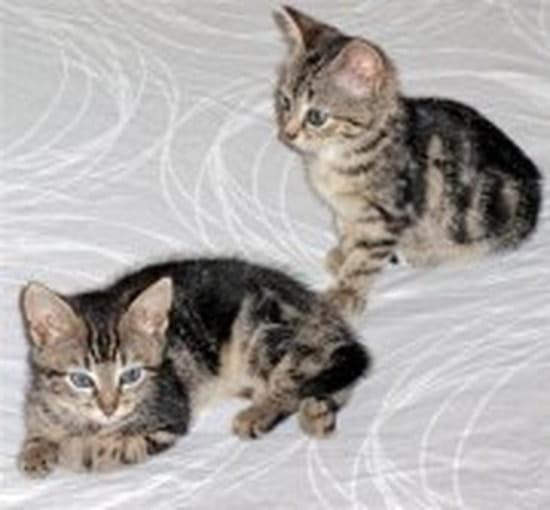 les meilleures photos de la chatte gratuite